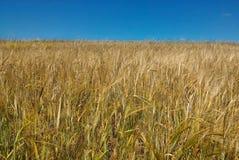 La cosecha de la cosecha, otoño está viniendo pronto Fotos de archivo