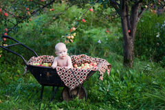 La cosecha rica Foto de archivo libre de regalías