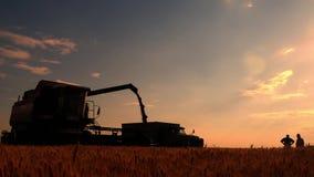 La cosechadora de la máquina segador vierte el grano en el camión en el campo Máquina trilladoa que vierte el trigo cosechado jus almacen de metraje de vídeo