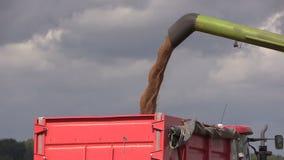La cosechadora descarga el grano en el remolque en backround oscuro del cielo almacen de video