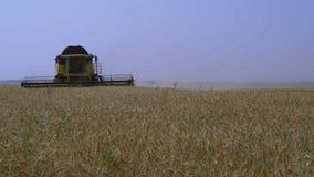 la Cosechadora-máquina segador recolecta el trigo almacen de video