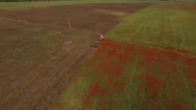 La cosechadora pasa a través del campo con las flores rojas y las transfiere Opinión del ojo del ` s del pájaro metrajes