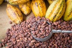 La cosse et les haricots mûrs de cacao ont installé sur le fond en bois rustique Photo libre de droits