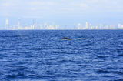 La costa costa del Gold Coast Imagenes de archivo