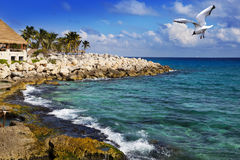 La costa de mar en parque cerca de Cozumel, México Fotografía de archivo