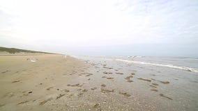 La costa costa de la playa después de que la tormenta sea cubierta por las algas lanzadas apagado por la orilla Las gaviotas circ metrajes