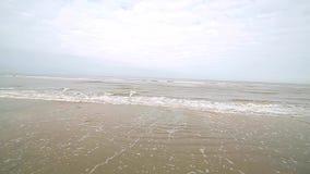 La costa costa de la playa después de que la tormenta sea cubierta por las algas lanzadas apagado por la orilla Las gaviotas circ almacen de video