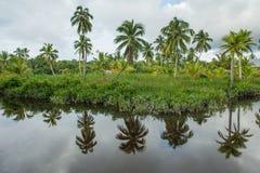 La costa del fiume selvaggio nella giungla - il posto tipico per lo stabilimento delle tribù di Asmat La Nuova Guinea l'indonesia immagini stock libere da diritti