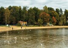 La costa del golfo finlandese del Mar Baltico in autunno immagini stock libere da diritti
