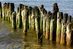 La costa del mar Báltico y del rompeolas de polos de madera Foto de archivo