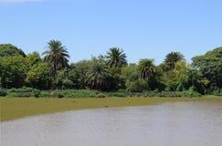 La costa del río con las palmeras en el otro lado Imágenes de archivo libres de regalías