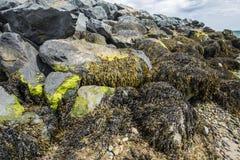 La costa empiedra la playa salvaje en Irlanda Fotos de archivo libres de regalías