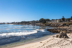 La costa pacífica de la arboleda, Monterey imagenes de archivo