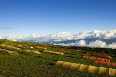 La Costa Rica Parque Nacional Volcan Irazu Fotografie Stock