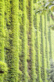 La costruzione con la vite verde Immagine Stock Libera da Diritti