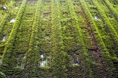 La costruzione con la vite verde Fotografia Stock Libera da Diritti
