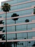 La costruzione riflette la palma Fotografia Stock