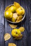 La cotogna è frutti di autunno Immagine Stock