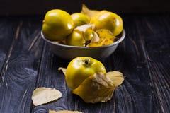 La cotogna è frutti di autunno Fotografia Stock Libera da Diritti