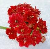 La couleur chaude des plantes tropicales et la blancheur froide de la neige photographie stock libre de droits