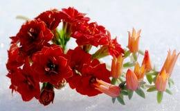 La couleur chaude des plantes tropicales et la blancheur froide de la neige image stock