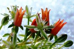 La couleur chaude des plantes tropicales et la blancheur froide de la neige image libre de droits