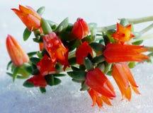La couleur chaude des plantes tropicales et la blancheur froide de la neige photographie stock