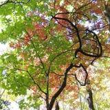 La couleur de novembre Image libre de droits