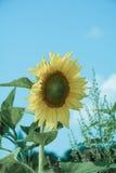 La couleur du soleil Image libre de droits