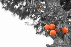 La couleur sélective, orange images stock