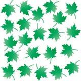 La couleur verte laisse le fond de modèle image stock