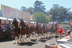 LA County Fair 2014 Stock Photography