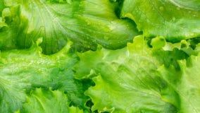 La coupe fraîche part de la texture verte de laitue, vue supérieure images stock