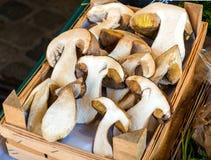 La coupe fraîche répand des cèpes dans un panier, en vente sur un marché, en automne photographie stock libre de droits