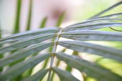 La courbe verte Image libre de droits