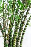 La courge en bambou image stock