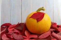 La courge jaune d'automne se situe dans les feuilles images libres de droits