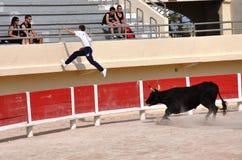La Course Camarguaise Royalty Free Stock Photo