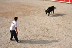 La Course Camarguaise Royalty Free Stock Photography