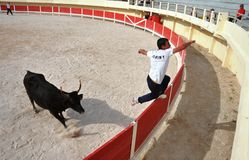 La Course Camarguaise Stock Photos