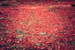 La couverture ensanglantée rouge de fleurs a rectifié dans le jardin formel tropical comme fond de nature Photographie stock