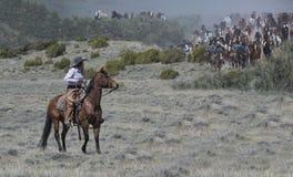 La cow-girl montant un cheval de baie est prête à aider des centaines de mouvement de chevaux rapidement de approche sur le grand Images libres de droits