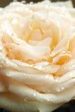 La crème s'est levée avec des baisses de l'eau Image libre de droits