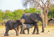 La cría linda del becerro del elefante del bebé de ella es madre mientras que visita el camping en el parque nacional de Hwange fotos de archivo libres de regalías