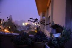 La crassulacee del fiore, i rosmarini, il balcone domestico, lampada solare accesa, fiorisce le siluette immagine stock libera da diritti