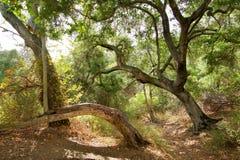 La creación que sorprende del bosque de la naturaleza en el planeta imagenes de archivo