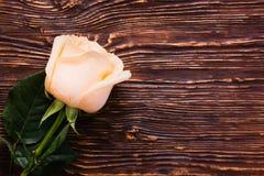 La crema fresca subió en fondo de madera Foto de archivo