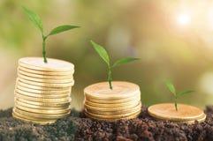 La crescita dell'albero alta ed impilata sulle monete con suolo, concetto dentro risparmia i soldi dell'affare Immagini Stock Libere da Diritti