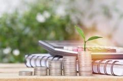 La crescita dell'albero alta ed impilata sulle monete, concetto dentro risparmia i soldi dell'affare Fotografia Stock