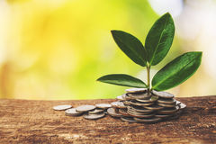 La crescita di affari, profitto Immagine Stock